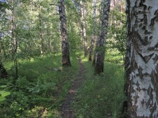 Тропа в лесу.