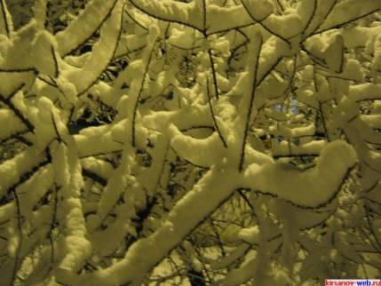 В снежной чаще