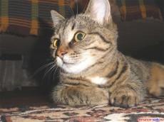 Кот Васька.