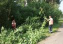 вырубка сорняка в Чутановке